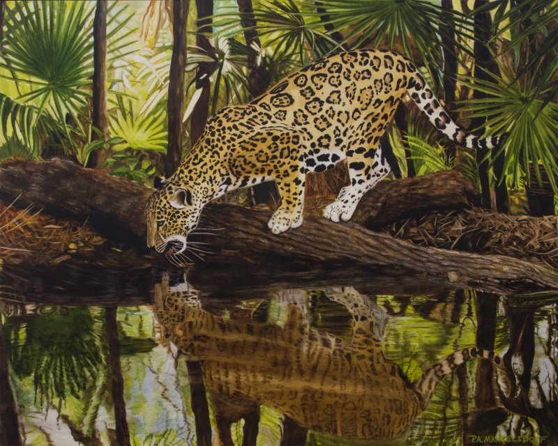 JaguarReflectionsII.jpg