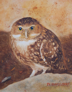BurrowingOwl-Donation