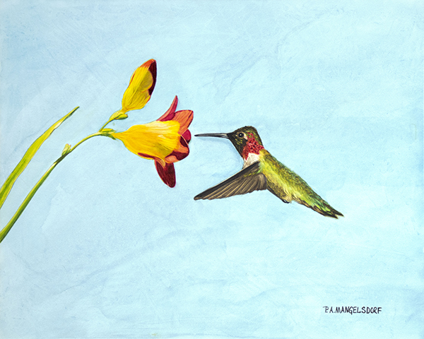 HUMMINGBIRD 1-GrebeFinal-600