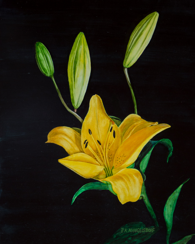 Helen's Lily