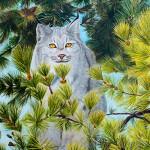 Lynx-IMG_1654