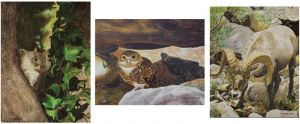 My Entries (left to right): Along Oak Creek Canyon, Burrowing Owl, and San Juan River Big Horn